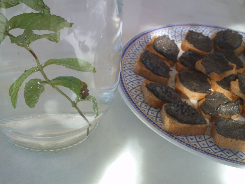 Tapenade & water