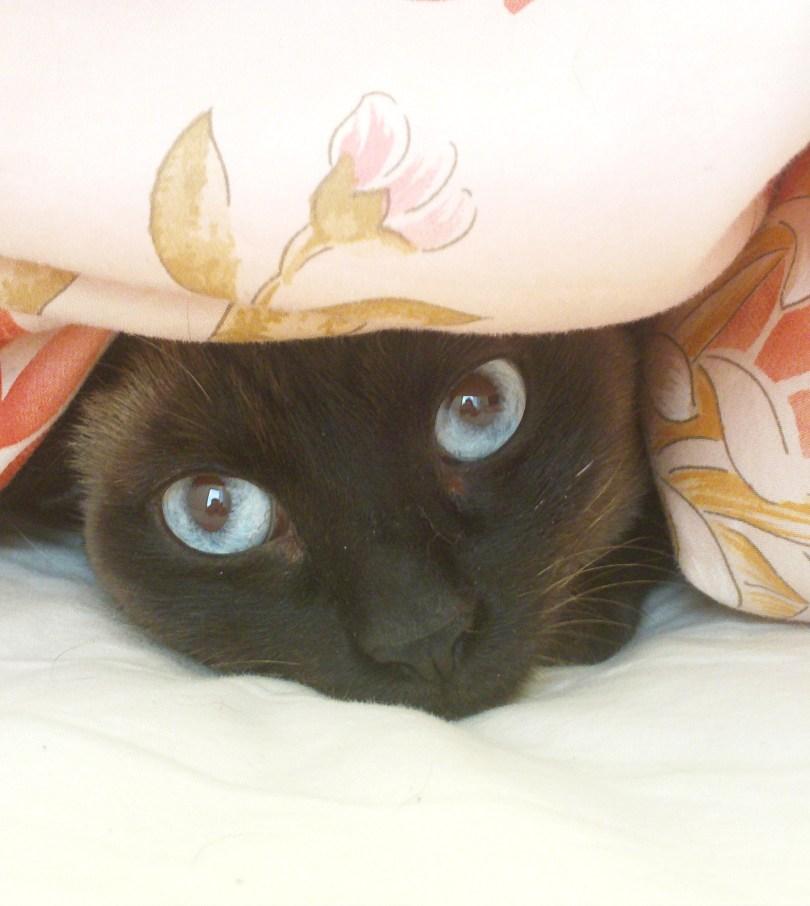 Anouschka in Bed
