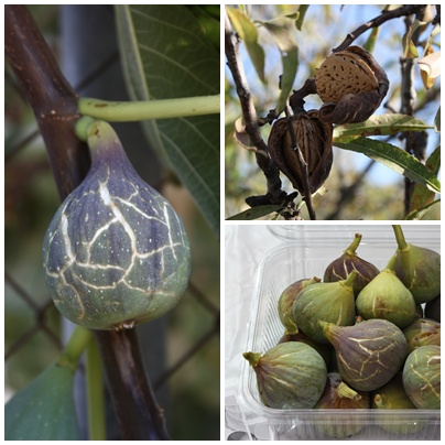 Figs & Almonds