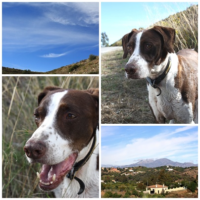 Rufus & Blue Sky